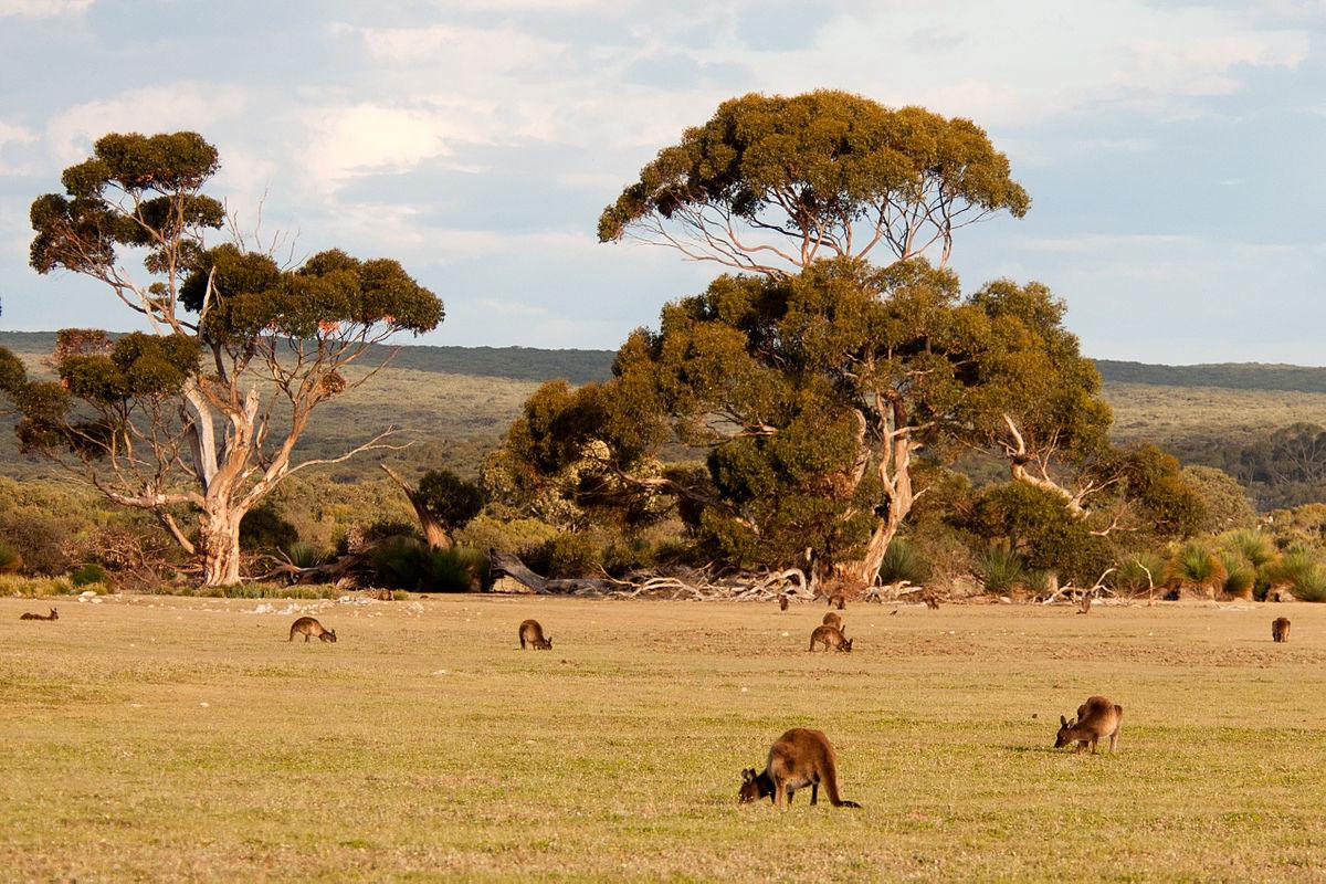 ../../../_images/kangaroos1.jpg