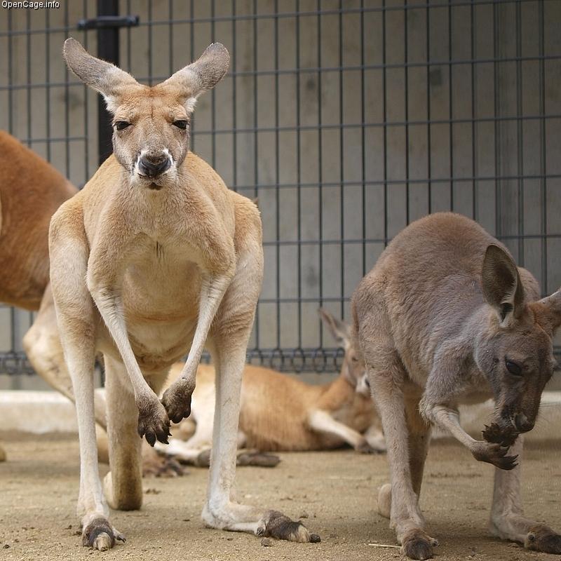 ../../../_images/kangaroos6.jpg